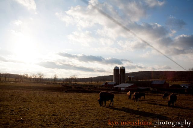 Setting sun at Readington River Buffalo Company, grass-fed bison in New Jersey, photographed by Kyo Morishima