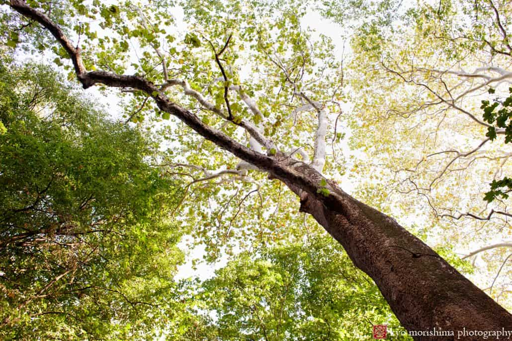 A view of the tree canopy at Prospect Park in October photographed by Kyo Morishima