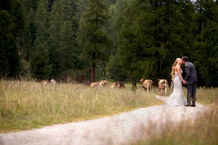 Bride and groom kiss on winding road in Swiss Alps for European destination wedding photography in Switzerland. Swiss dairy cows, grassy field and forest in background.