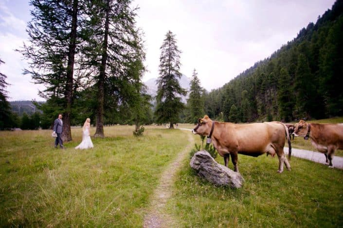 Bride and groom walk along winding path in Swiss Alps as Swiss dairy cows look on for European destination wedding photographer, tree covered mountain, grassy field, Switzerland.